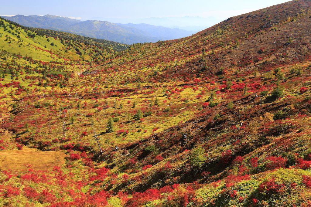 登って食べる価値がある!紅葉と共に楽しみたい志賀高原の標高グルメの画像