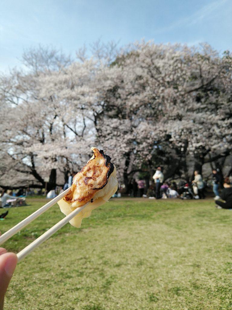 1年365日餃子を食べている広告マンが提案。「花見も餃子だ!」の画像