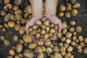 〈食べペディア 50〉GMOフリーの画像